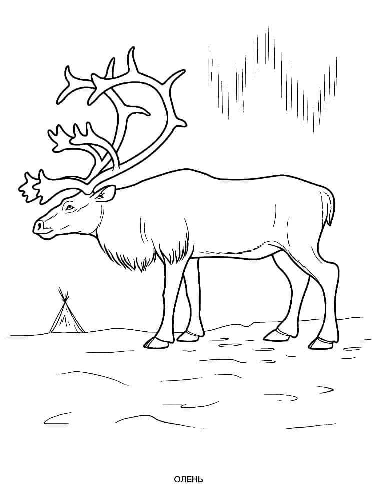Раскраска новогодний Олень. Олени Санты с ветвистыми ...
